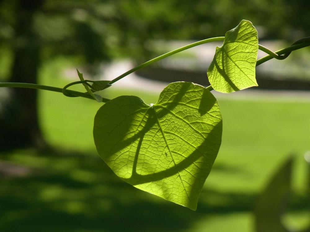 Herz für den Botanischen Garten