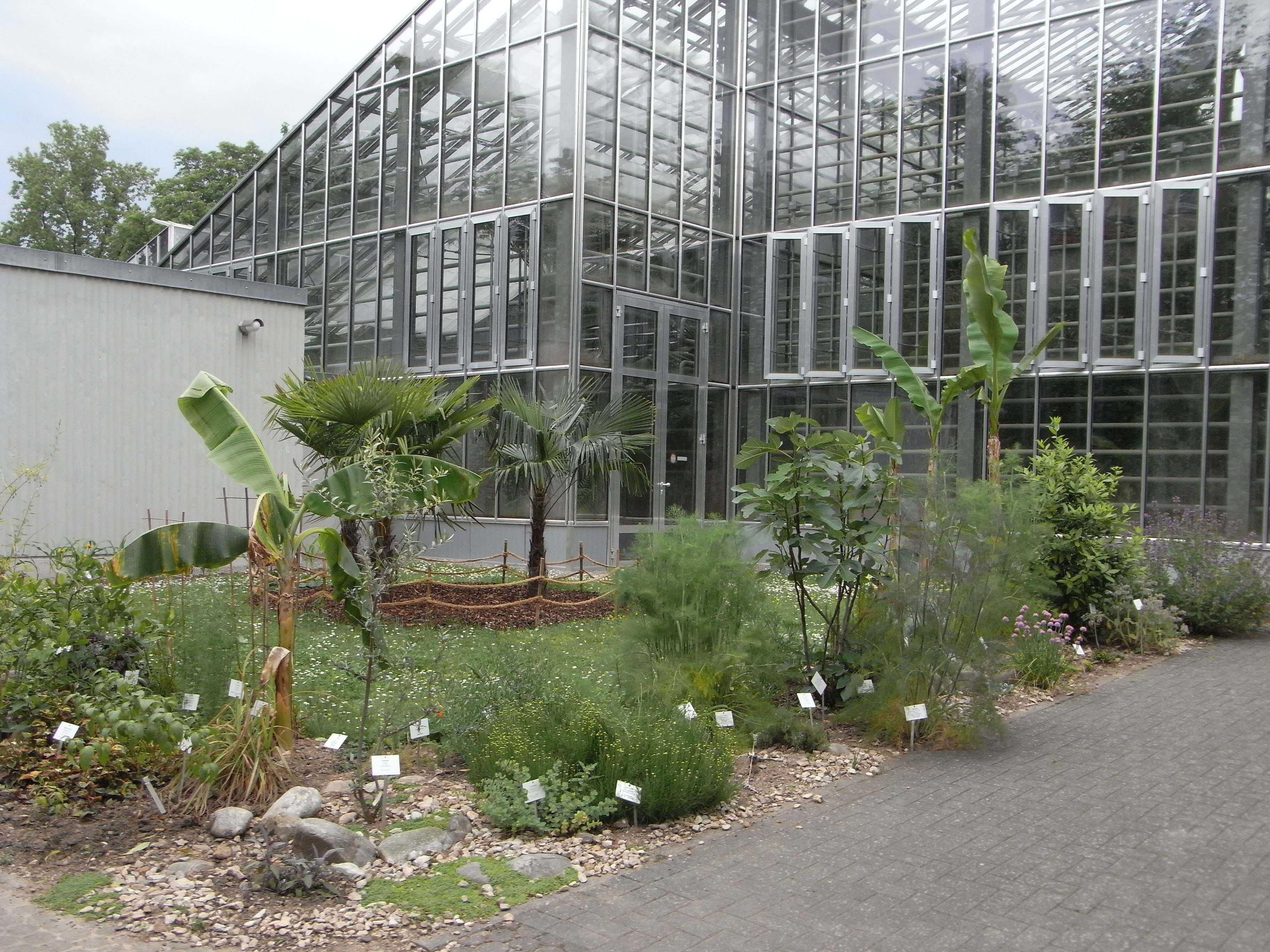 Nutzpflanzen im Botanischen Garten Freiburg — Botanischer