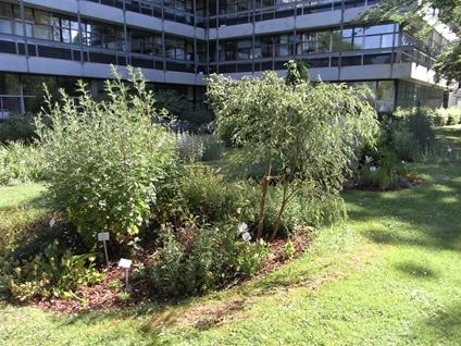 Übersicht Heilpflanzenbeete