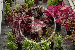 11 Pflanzenanzucht 260